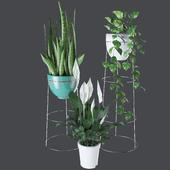 Living room plants decor