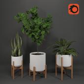 Living room plants decor_Set 4
