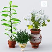 Flower_room_set1
