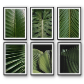Tropical Leaves | set 31