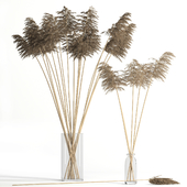 Dry reed