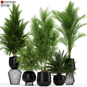 Plants collection 184