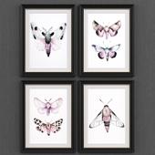 Moths set