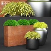 Grass in pots | Hakonechloa planter