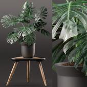 Plants 160