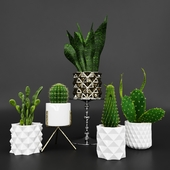Cactuse collection: Hadis Model_02