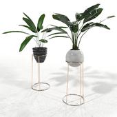 Plants set 2
