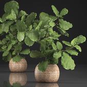 Коллекция растений 359.