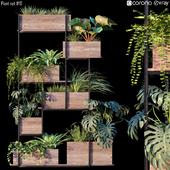 Plant set # 10