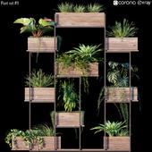 Plant set # 11