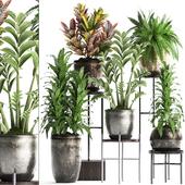 Коллекция растений 362.