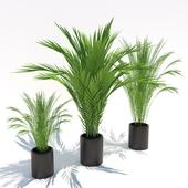 small palms