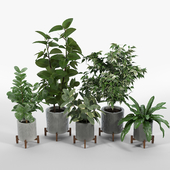 Bungalow Planter Collection