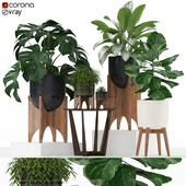 Plants collection 187 westelm