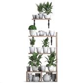 Коллекция растений 364