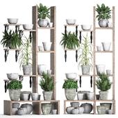 Коллекция растений 365