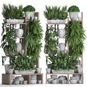 Коллекция растений 369