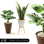 plant collection_set 02
