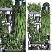 Коллекция растений 371