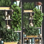 Коллекция растений 372
