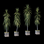 Palm trees in concrete pots. 4 models