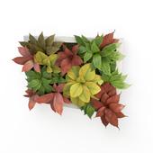 Plants Frame 50 x 40 cms