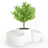 White Pot and Seat Sardana