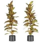 Plant in Pot Flowerpot Exotic Plant