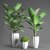 Набор растений 3