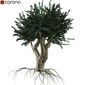 3d models: Trees - download 3dsky org