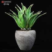 indoor_plant_01