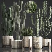 Коллекция растений 374