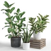 Set of plants 08