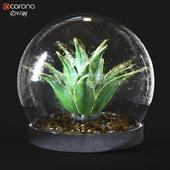 plant_indoor_02