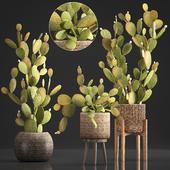 Коллекция растений 375. Cactus set.