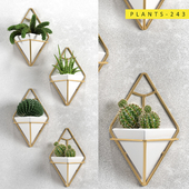 Plants 243