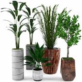 Коллекция растений для лофта