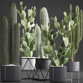 Коллекция растений 376. Cactus set.