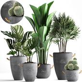 Коллекция растений 378.