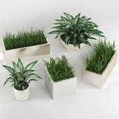 Indoor plants: a set of potted plants