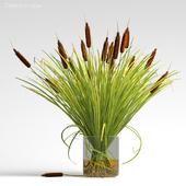 Cattails in vase