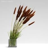 Cattails in vase #2