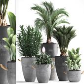 Коллекция растений 379.