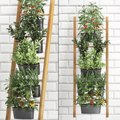 Vertical gardening. 36