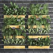 Вертикальное озеленение. 40