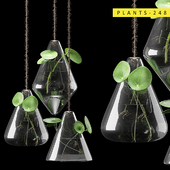 plants 248