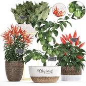 Коллекция растений 387. pepper