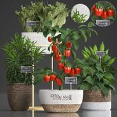 Коллекция растений 388. pepper