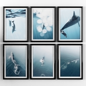 Posters: whale and dolphin
