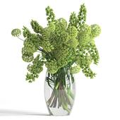 Green Fritillaria Persica & Viburnum